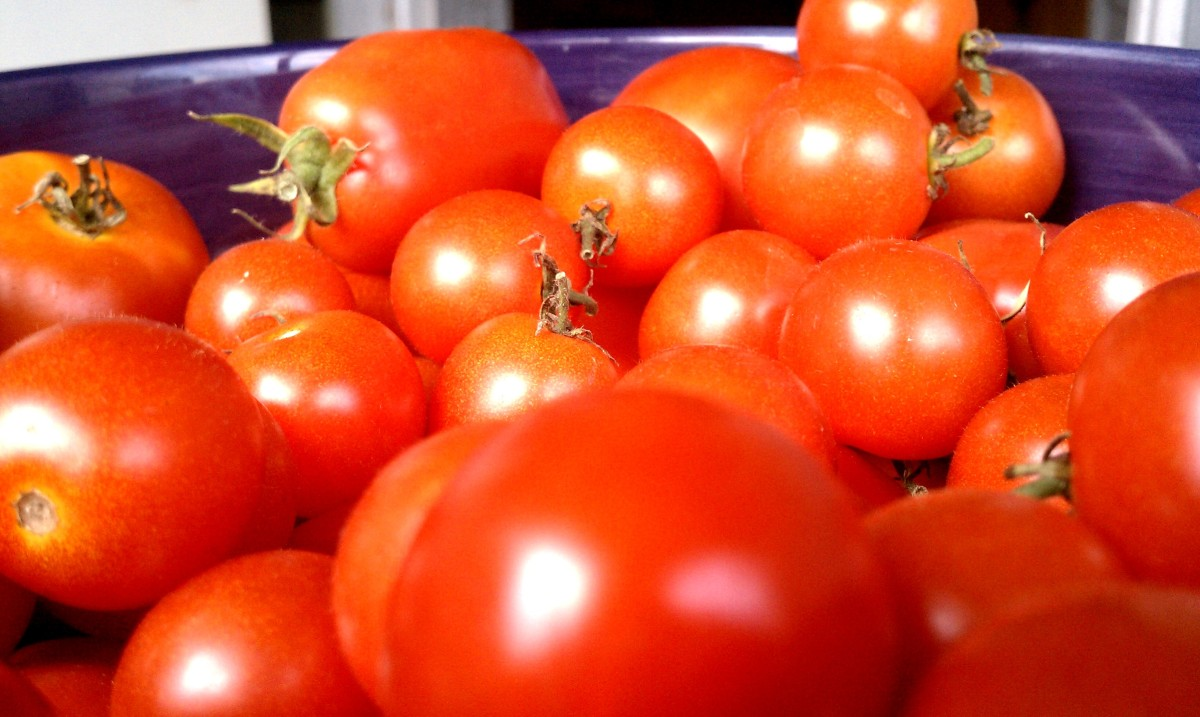 Tomatoes from Jen