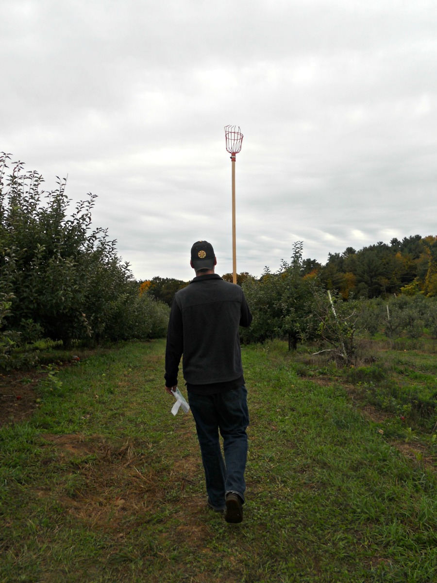Apple Picking 2012