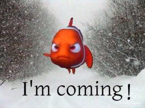 Blizzard Nemo