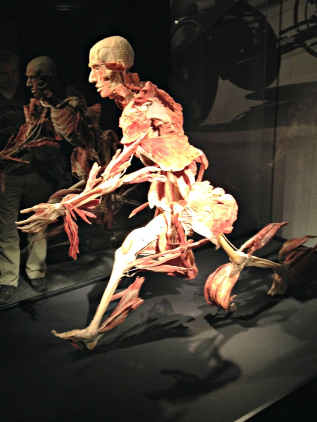 Body Worlds Vital: Runner