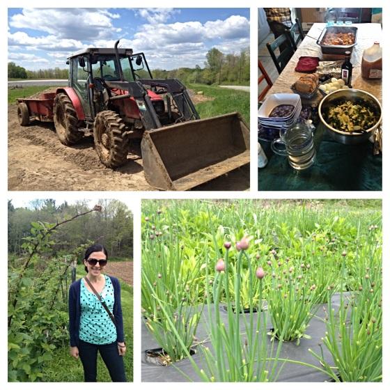 Heaven's Harvest Farm