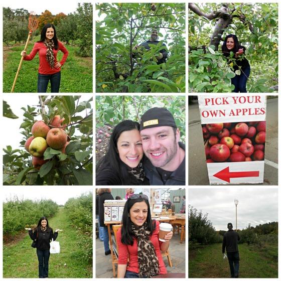 Apple Picking 2012
